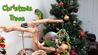 Parrots Playing on Tree by the Christmas Tree