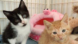 New Kittens Named