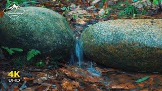 Relaxing water sound | 4K Forest Stream,White Noise Raining | Birds song