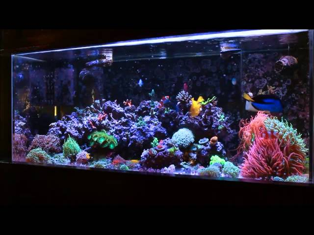 Amazing Coral Reef Tank
