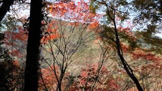 紅葉重楽寺徳島県