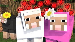 Sheep Life 1   Minecraft Animation