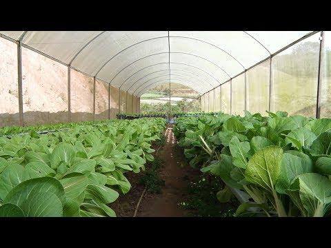 Agricultores de Nova Friburgo explicam por que usam ou não agrotóxicos