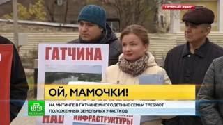 К митингующим за землю многодетным так и не вышли чиновники Гатчинской администрации