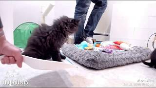 """Tiny kitten """"helps"""" with cleaning"""