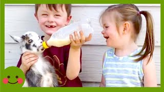 Videos para niños ★ Los bebés más lindos tienen problemas con el pescado #Woababy