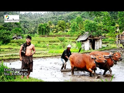 Desa-Tegak-di-mata-Artis-Pop-Bali-Dek-Pekir-Dot-Nyentana.html