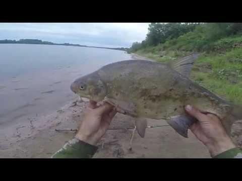 Ловля леща на течении с берега, видео rybachil.ru