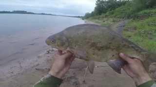 Как ловить на кольцовку с берега