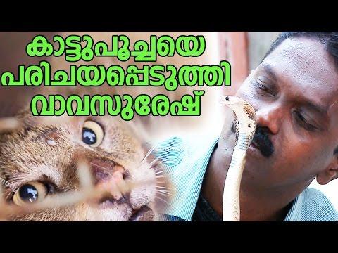 Wow ! Vava Suresh Catching a Wild Cat & Baby Cobra    Snake Master