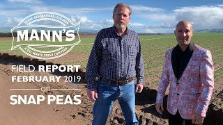 Field Report | February 2019 - Cold Weather and Snap Pea Effects