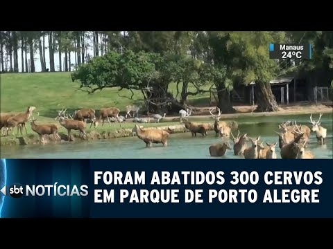300 cervos foram abatidos em Porto Alegre