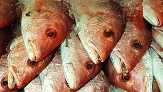 13 Seafood Facts That Will Creep You Out thumbnail