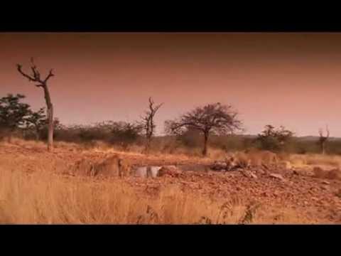 Ongava Lions (+- 1 minute long)