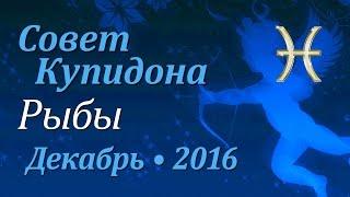 Рыбы, совет Купидона на декабрь 2016. Любовный гороскоп.