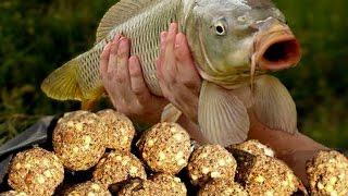 Как приготовить простую прикормку для рыбы