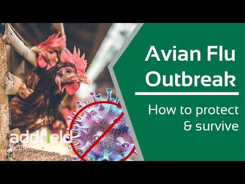 The dangers of Avian Flu across the UK.