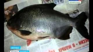 В Котласе поймана рыба с «человеческими» зубами