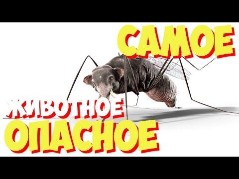 Трихомонада это внутриклеточный паразит