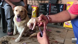 Pet Care - Labrador Retriever Mother Delivery New Pup | Puppys - BholaShola | Harwinder Singh Grewal