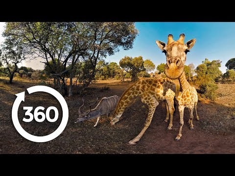 The Fight to Save Threatened Species 360°