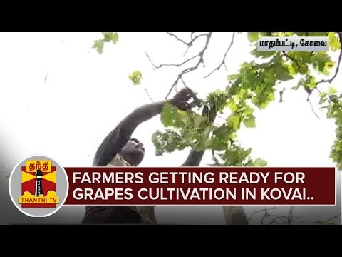Farmers-getting-ready-for-Grapes-Cultivation-in-Coimbatore-Thanthi-TV