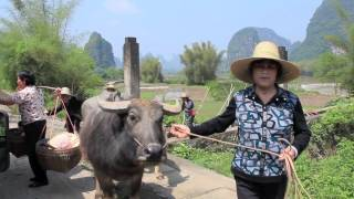Video : China : Beautiful scenery around YangShuo 阳朔 and GuiLin 桂林 - video
