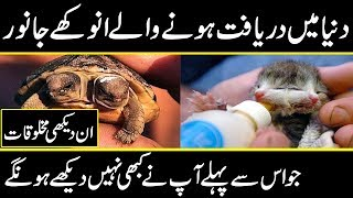 most attractive and rare animals in the planet earth || development in science || The Discovery