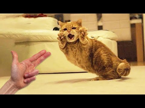 Cute Pets And Funny Animals Compilation #12