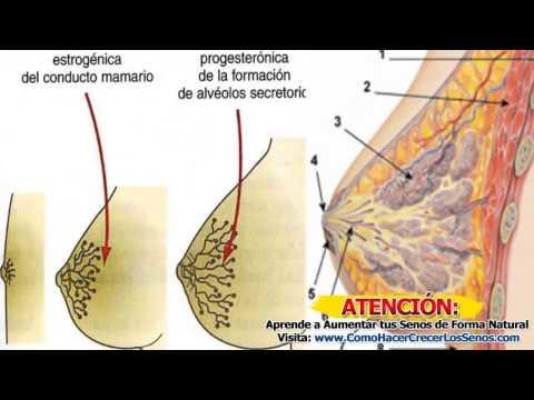 La operación del aumento del pecho rostov