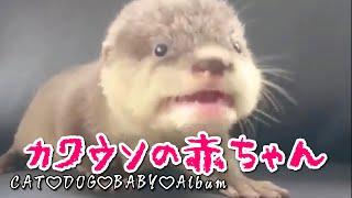 動物の赤ちゃん超かわいい動物の赤ちゃん動画集①