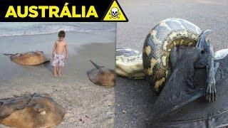 Veja por que a AUSTRÁLIA é  O PAÍS MAIS PERIGOSO DO MUNDO !!