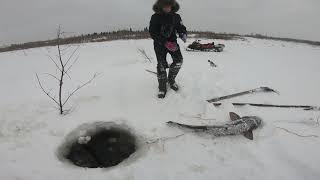 Диалоги о рыбалке зимняя рыбалка на налима