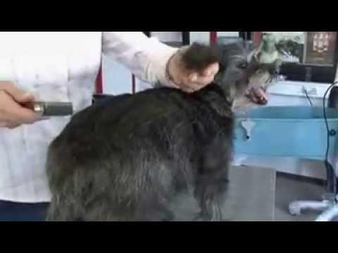 Mars ALCOSO Coat King Multi-Trimm-Striegel für Hunde