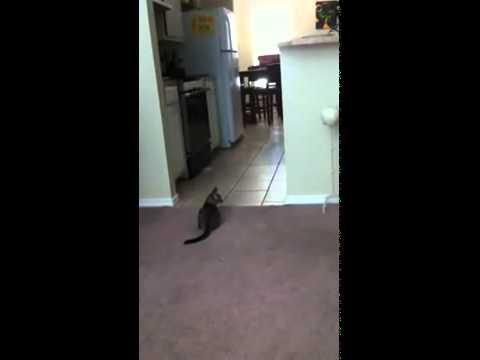 אשליה אופטית - חתול שקורא מחשבות!