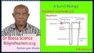 Excretion lesson 2 of 2