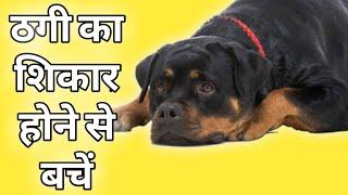 10 VEGAN MEAT DISHES | BOSH! | VEGAN Random Youtube Video on