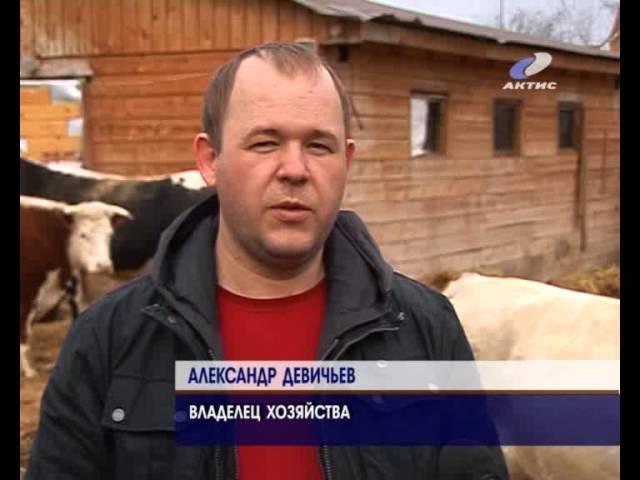 Ветеринары проводят плановое обследование скота