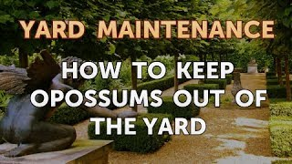 How to Keep Opossums Out of the Yard