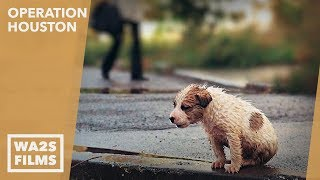 Forgotten Dogs Rescue Homeless Puppy in the Rain at Night - Hope For Dogs | My DoDo