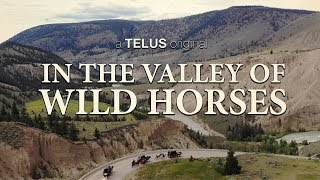 In The Valley Of Wild Horses