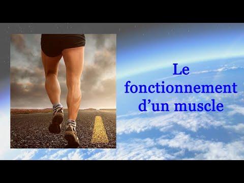 Lanatomie des muscles des pieds dans limage