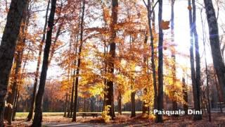 Autunno,Caduta delle foglie