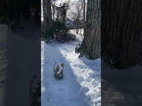 Indigo, an adoptable Australian Cattle Dog / Blue Heeler in Verona, NJ