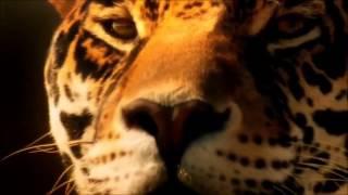 Adam Lambert - By The Rules (MUSIC VIDEO)