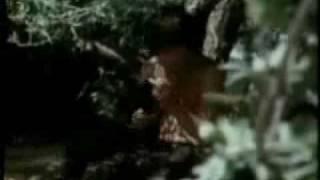 The Doors - Universal Mind
