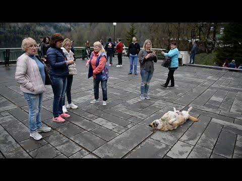 Hund als Touristenattraktion