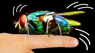 Почему мухам так нравится ваше лицо