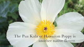 Learn About The Flowers Of Hawaii