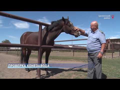 В Ростовской области Управление Россельхознадзора проверило условия содержания животных в Кировском конном заводе